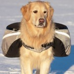 Doggles EX Extreme Outdoor Gear backpack on Dog in life shot