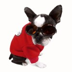 Designer K9 ILS Dog Doggles for your dogs eye protection