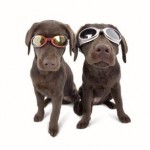 K9 ILS Dog Doggles available in several colors!