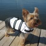 Paws Aboard Designer Louie Pet Dog Life Jacket Vest